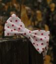 motylik bodkovy 2
